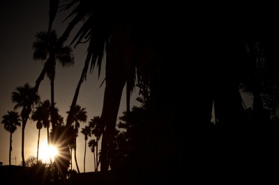 preview sunset palm tree horiz
