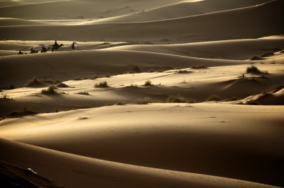 web dunes and camels
