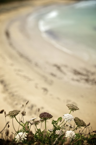preview flowers and beach verti