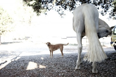 preview-dog-and-horsebutt